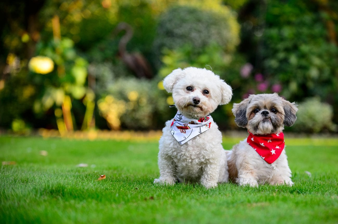 Hertfordshire pet photographer