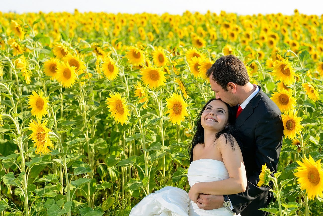 Sunflower field wedding photography