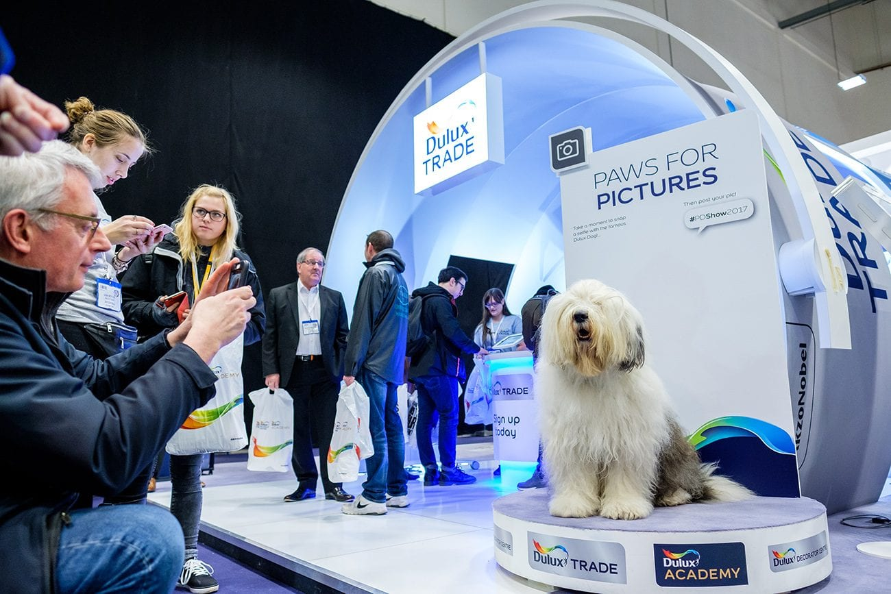 Dulux dog photography